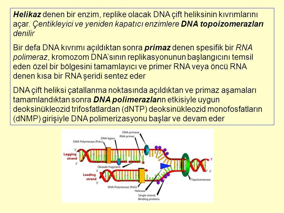 E.coli'den izole edilen üç çeşit DNA polimeraz vardır.