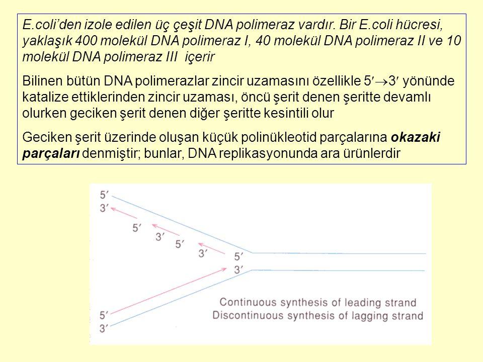 E.coli'den izole edilen üç çeşit DNA polimeraz vardır. Bir E.coli hücresi, yaklaşık 400 molekül DNA polimeraz I, 40 molekül DNA polimeraz II ve 10 mol