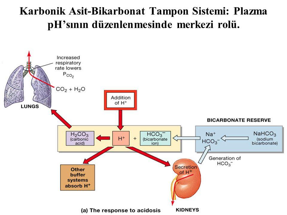 Figure 27.11a Karbonik Asit-Bikarbonat Tampon Sistemi: Plazma pH'sının düzenlenmesinde merkezi rolü.