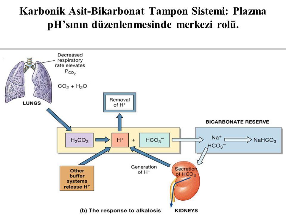 Figure 27.11b Karbonik Asit-Bikarbonat Tampon Sistemi: Plazma pH'sının düzenlenmesinde merkezi rolü.