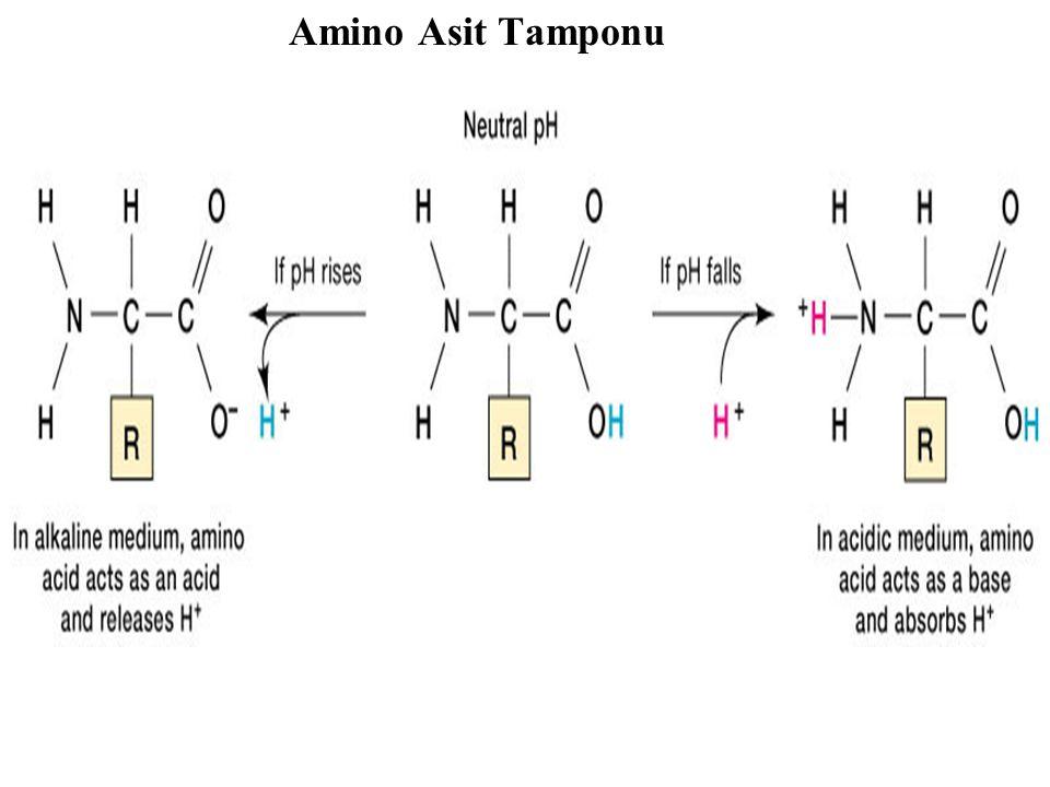 Amino Asit Tamponu
