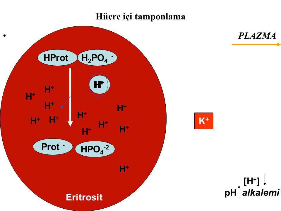 Hücre içi tamponlama PLAZMA Prot - HPO 4 -2 H+H+ HProtH 2 PO 4 - Eritrosit K+K+ H+H+ H+H+ H+H+ H+H+ H+H+ H+H+ H+H+ H+H+ H+H+ H+H+ H+H+ H+H+ [H + ] pH alkalemi