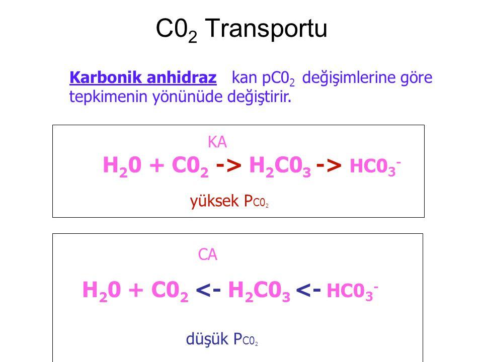 C0 2 Transportu Karbonik anhidraz kan pC0 2 değişimlerine göre tepkimenin yönünüde değiştirir.