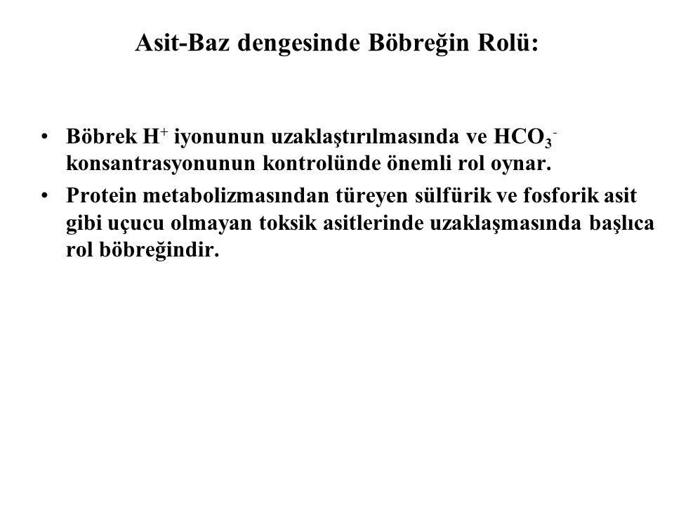 Asit-Baz dengesinde Böbreğin Rolü: Böbrek H + iyonunun uzaklaştırılmasında ve HCO 3 - konsantrasyonunun kontrolünde önemli rol oynar.