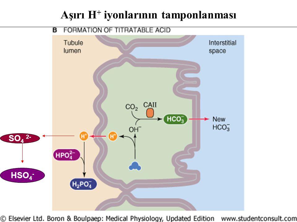Aşırı H + iyonlarının tamponlanması SO 4 2- HSO 4 -