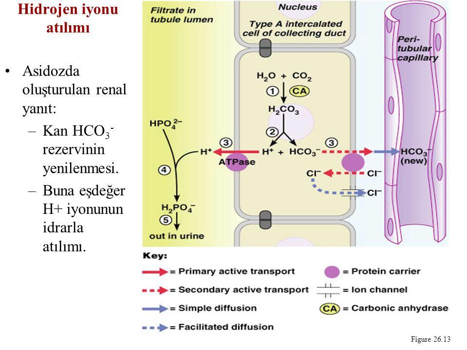 Hidrojen iyonu atılımı Asidozda oluşturulan renal yanıt: –Kan HCO 3 - rezervinin yenilenmesi.