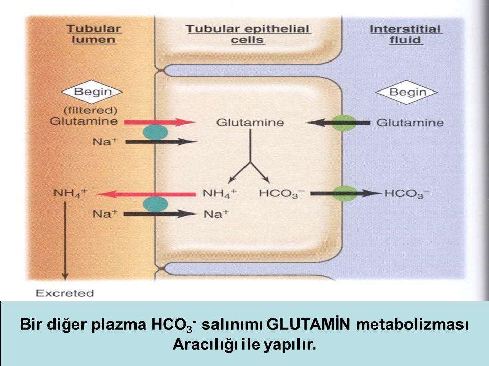Bir diğer plazma HCO 3 - salınımı GLUTAMİN metabolizması Aracılığı ile yapılır.