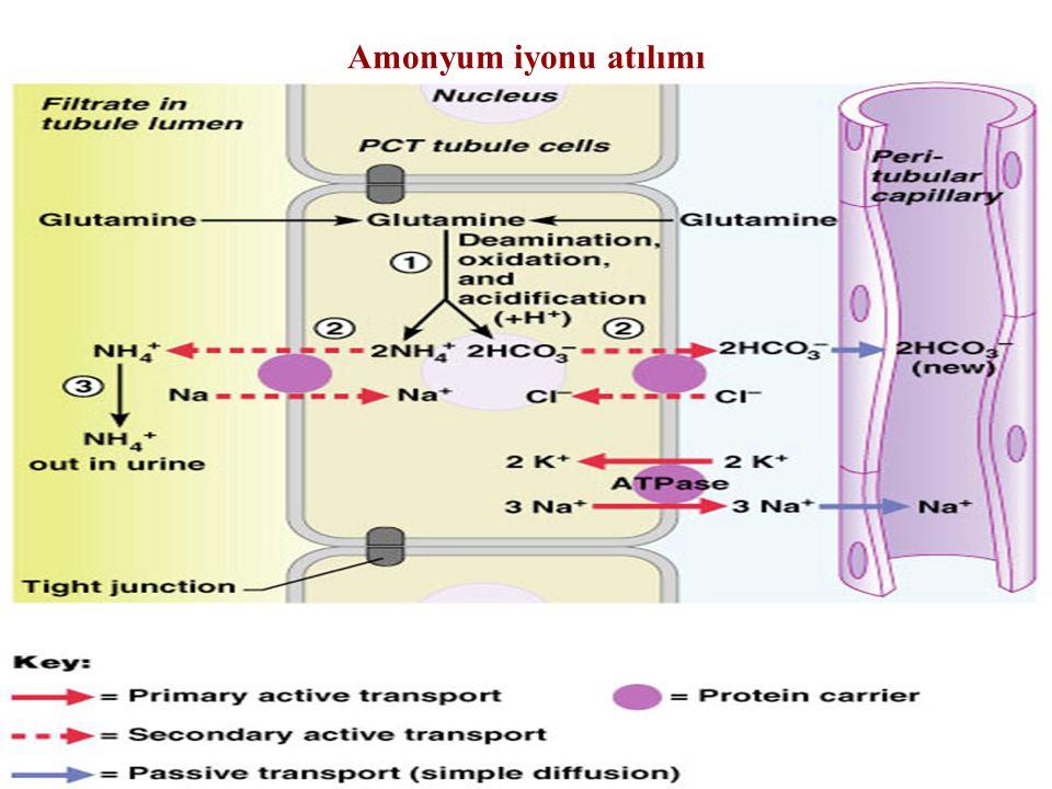 Amonyum iyonu atılımı Figure 26.14