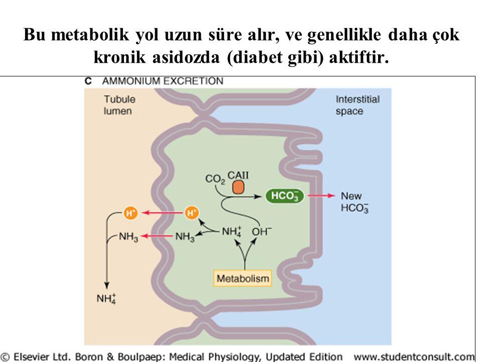 Bu metabolik yol uzun süre alır, ve genellikle daha çok kronik asidozda (diabet gibi) aktiftir.