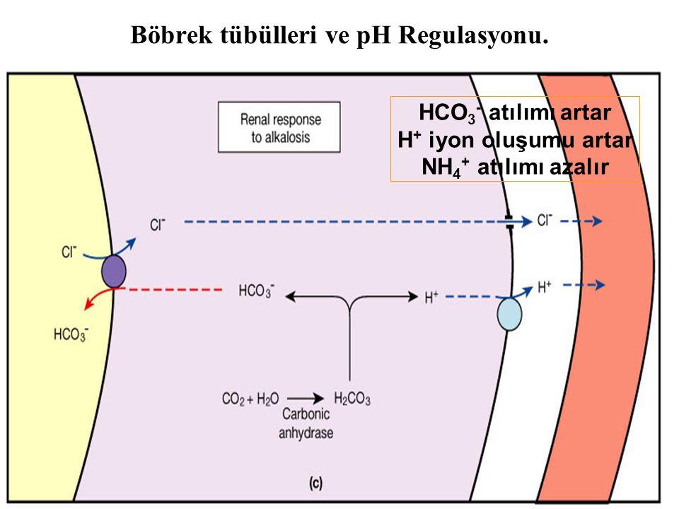 Böbrek tübülleri ve pH Regulasyonu.