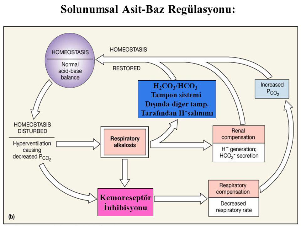 Solunumsal Asit-Baz Regülasyonu: Figure 27.12b Kemoreseptör İnhibisyonu H 2 CO 3 /HCO 3 - Tampon sistemi Dışında diğer tamp.