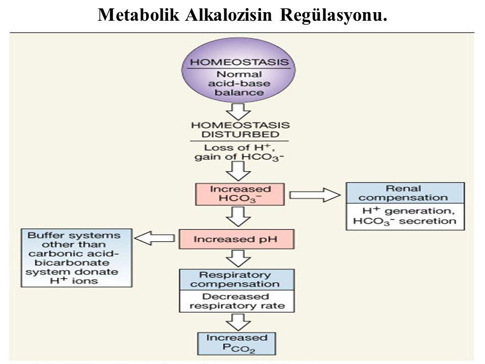 Figure 27.14 Metabolik Alkalozisin Regülasyonu.