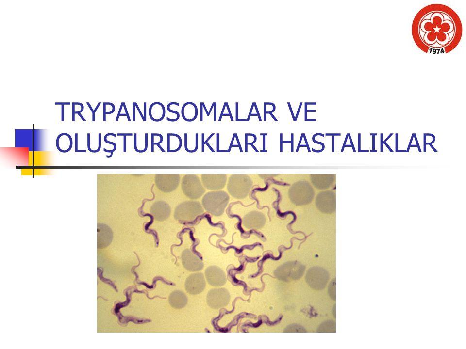 Trypanosomatidae ailesinin iki cinsi insanların kan ve dokularında yerleşir.