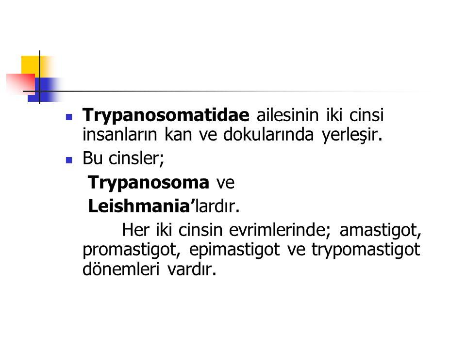 Trypanosomatidae ailesinin iki cinsi insanların kan ve dokularında yerleşir. Bu cinsler; Trypanosoma ve Leishmania'lardır. Her iki cinsin evrimlerinde