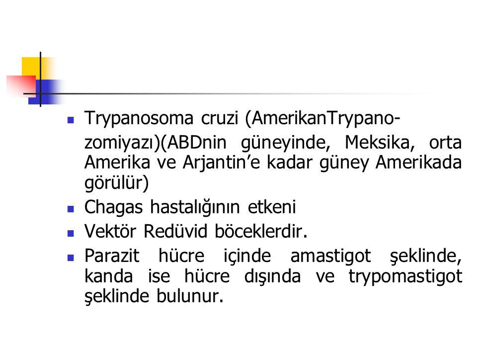 Trypanosoma cruzi (AmerikanTrypano- zomiyazı)(ABDnin güneyinde, Meksika, orta Amerika ve Arjantin'e kadar güney Amerikada görülür) Chagas hastalığının