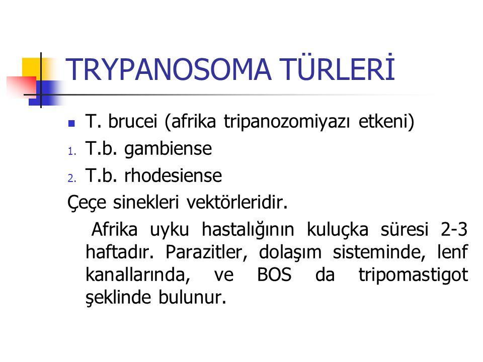 TRYPANOSOMA TÜRLERİ T. brucei (afrika tripanozomiyazı etkeni) 1. T.b. gambiense 2. T.b. rhodesiense Çeçe sinekleri vektörleridir. Afrika uyku hastalığ