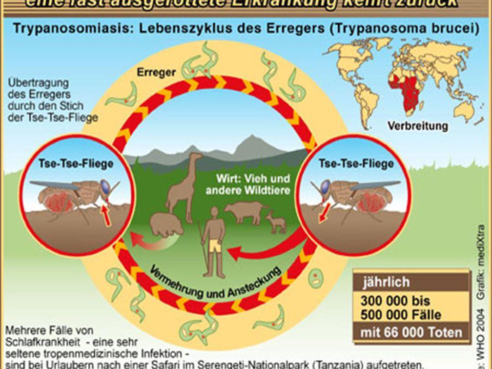 Trypanosoma cruzi (AmerikanTrypano- zomiyazı)(ABDnin güneyinde, Meksika, orta Amerika ve Arjantin'e kadar güney Amerikada görülür) Chagas hastalığının etkeni Vektör Redüvid böceklerdir.