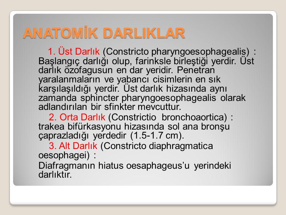 ANATOMİK DARLIKLAR 1. Üst Darlık (Constricto pharyngoesophagealis) : Başlangıç darlığı olup, farinksle birleştiği yerdir. Üst darlık özofagusun en dar