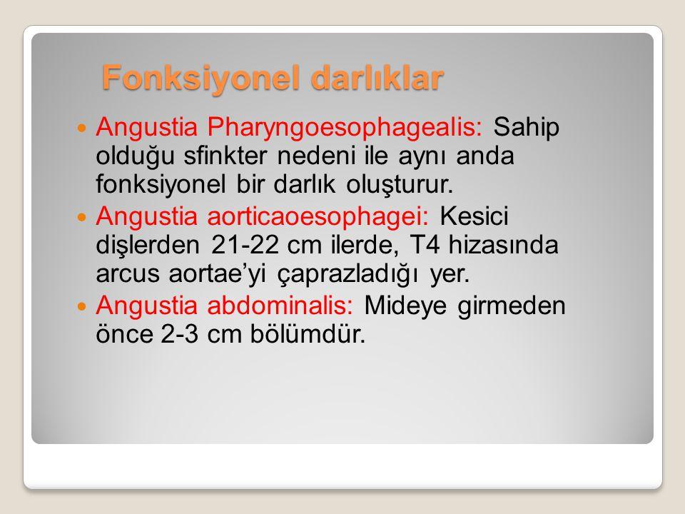 Fonksiyonel darlıklar Angustia Pharyngoesophagealis: Sahip olduğu sfinkter nedeni ile aynı anda fonksiyonel bir darlık oluşturur. Angustia aorticaoeso