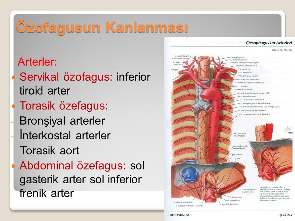 Özofagusun Kanlanması Arterler: Servikal özofagus: inferior tiroid arter Torasik özefagus: - Bronşiyal arterler - İnterkostal arterler Torasik aort Ab