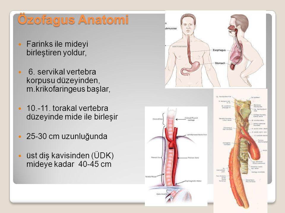 Özofagus Anatomi Farinks ile mideyi birleştiren yoldur, 6. servikal vertebra korpusu düzeyinden, m.krikofaringeus başlar, 10.-11. torakal vertebra düz