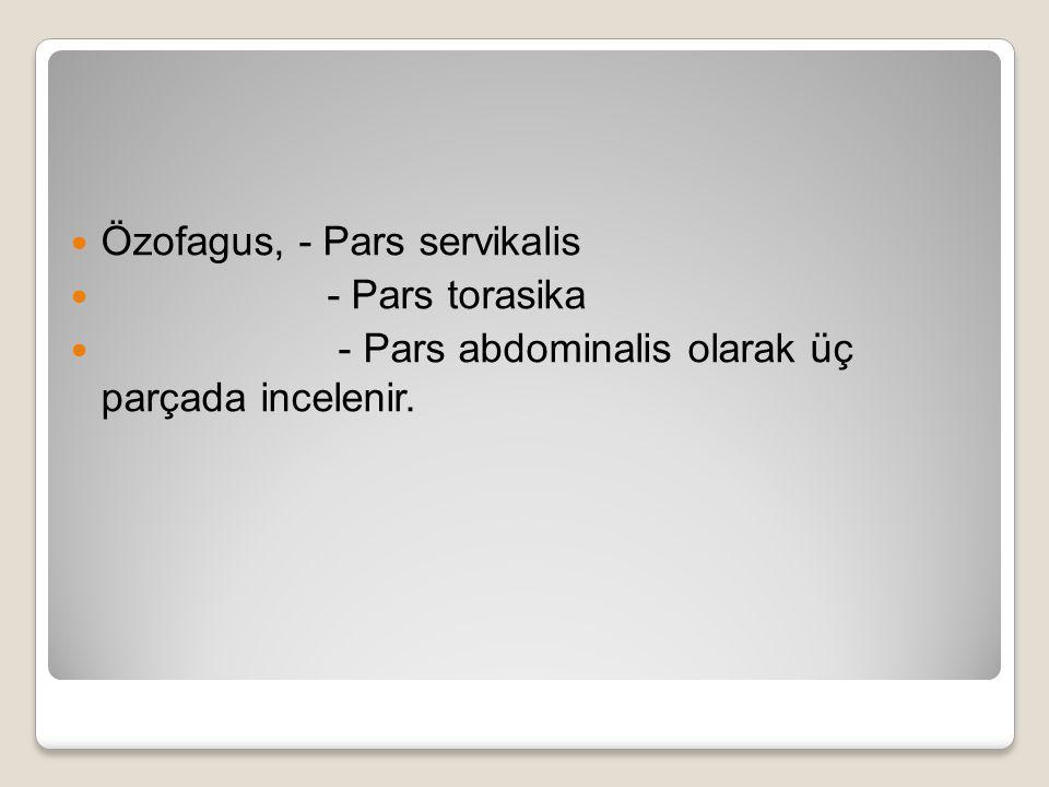 Özofagus, - Pars servikalis - Pars torasika - Pars abdominalis olarak üç parçada incelenir.