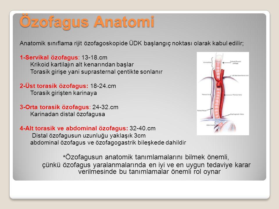 Özofagus Anatomi Anatomik sınıflama rijit özofagoskopide ÜDK başlangıç noktası olarak kabul edilir; 1-Servikal özofagus: 13-18.cm Krikoid kartilajın a