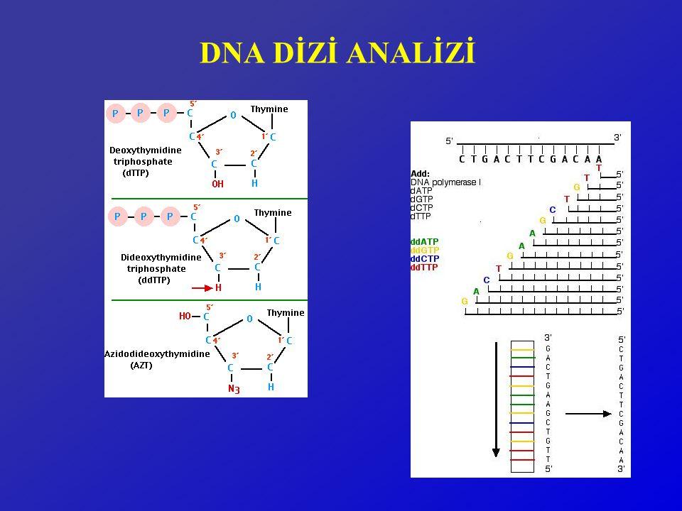 PCR TEMELLİ MUTASYON ANALİZ YÖNTEMLERİ  MUTASYONU ÖNCEDEN BİLİYOR VE YENİ BİR ÖRNEK GRUBUNDA VARLIĞINI SORGULAMAK İSTİYORSANIZ  RFLP ( Restriction Fragment Length Polymorphism)  ASA (Allele Specific Amplification)  Primer Extension