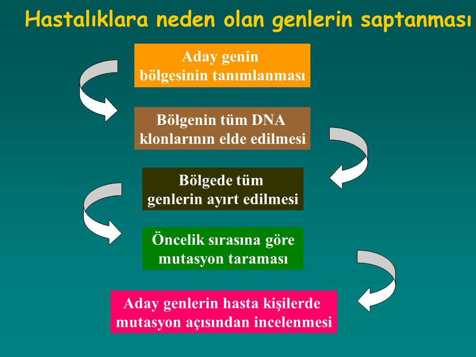 Aday genin bölgesinin tanımlanması Bölgenin tüm DNA klonlarının elde edilmesi Bölgede tüm genlerin ayırt edilmesi Öncelik sırasına göre mutasyon taram