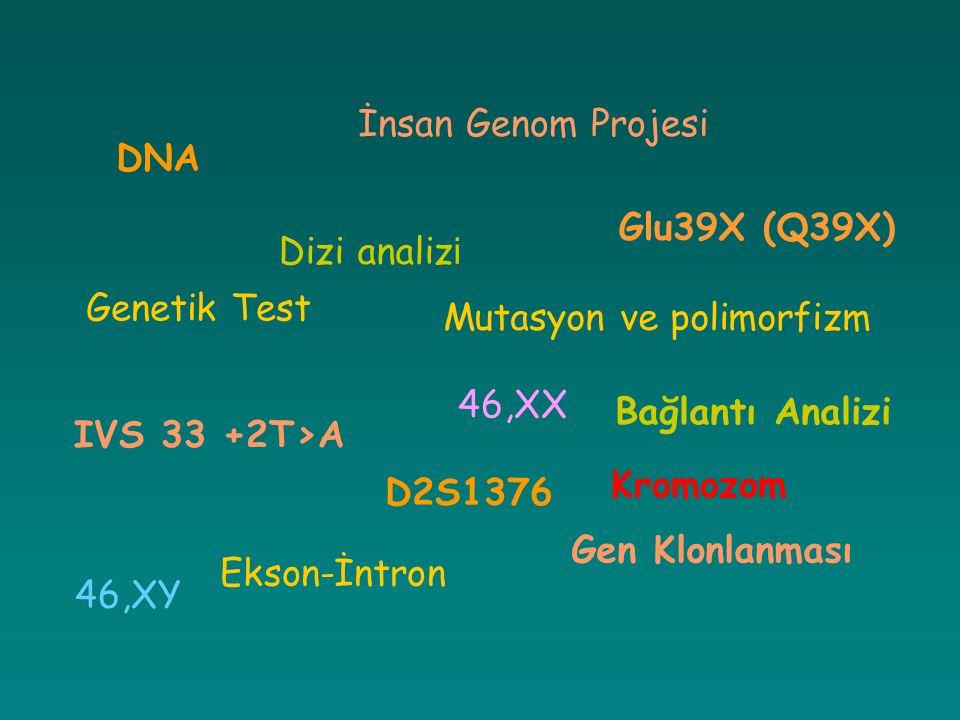 Mutasyon ve polimorfizm İnsan Genom Projesi IVS 33 +2T>A Glu39X (Q39X) Ekson-İntron DNA Genetik Test Bağlantı Analizi Gen Klonlanması D2S1376 Dizi ana