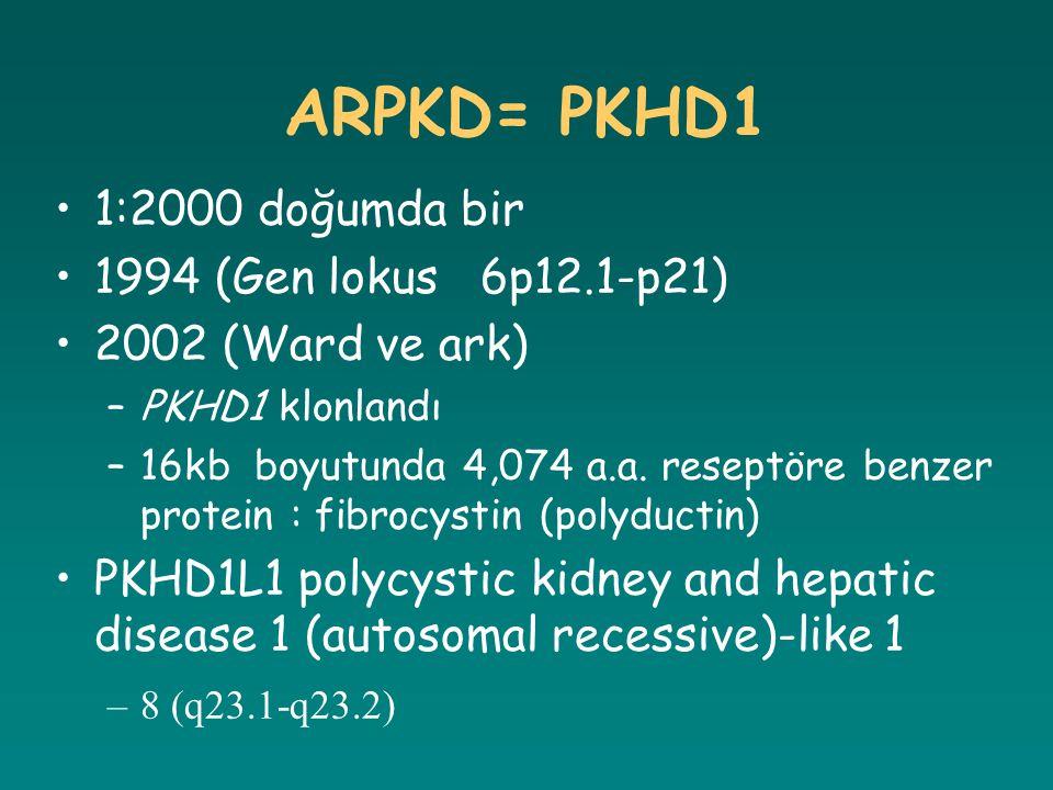 ARPKD= PKHD1 1:2000 doğumda bir 1994 (Gen lokus 6p12.1-p21) 2002 (Ward ve ark) –PKHD1 klonlandı –16kb boyutunda 4,074 a.a. reseptöre benzer protein :