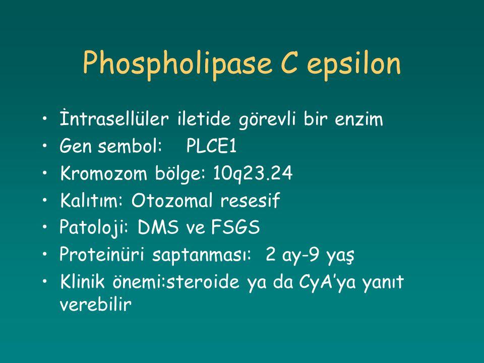 Phospholipase C epsilon İntrasellüler iletide görevli bir enzim Gen sembol:PLCE1 Kromozom bölge: 10q23.24 Kalıtım: Otozomal resesif Patoloji: DMS ve F
