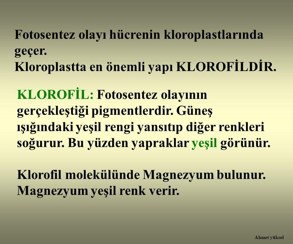 Fotosentez olayı hücrenin kloroplastlarında geçer. Kloroplastta en önemli yapı KLOROFİLDİR. KLOROFİL: Fotosentez olayının gerçekleştiği pigmentlerdir.