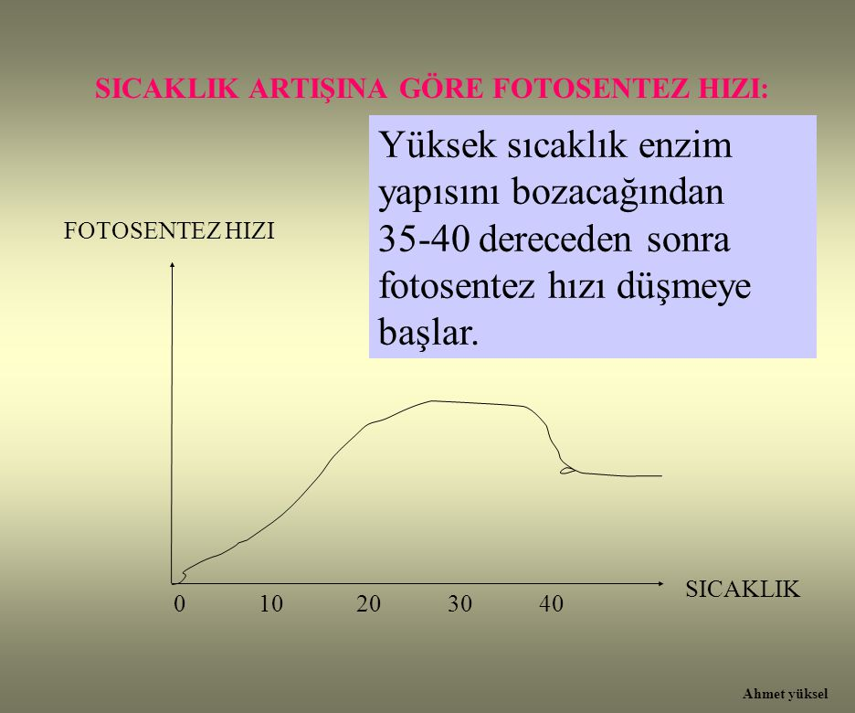 SICAKLIK ARTIŞINA GÖRE FOTOSENTEZ HIZI: Yüksek sıcaklık enzim yapısını bozacağından 35-40 dereceden sonra fotosentez hızı düşmeye başlar. 0 10 20 30 4