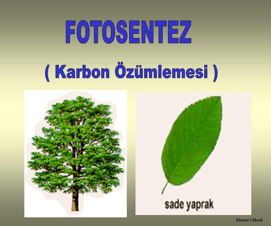 1- Aşağıdaki organellerden hangisi yalnızca bitki hücresinde bulunur.