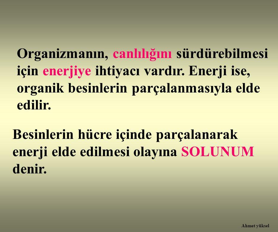 Organizmanın, canlılığını sürdürebilmesi için enerjiye ihtiyacı vardır. Enerji ise, organik besinlerin parçalanmasıyla elde edilir. Besinlerin hücre i