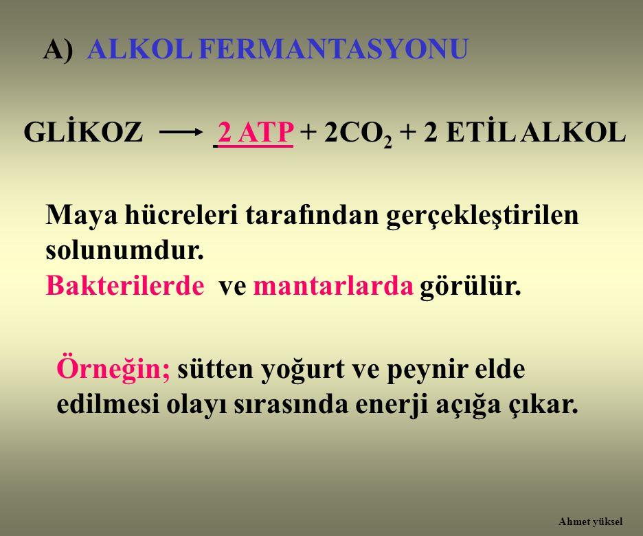 A) ALKOL FERMANTASYONU GLİKOZ 2 ATP + 2CO 2 + 2 ETİL ALKOL Maya hücreleri tarafından gerçekleştirilen solunumdur. Bakterilerde ve mantarlarda görülür.