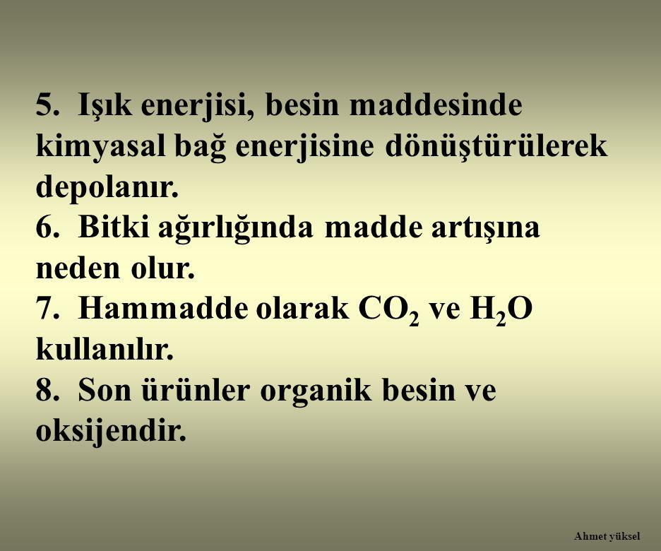 5. Işık enerjisi, besin maddesinde kimyasal bağ enerjisine dönüştürülerek depolanır. 6. Bitki ağırlığında madde artışına neden olur. 7. Hammadde olara