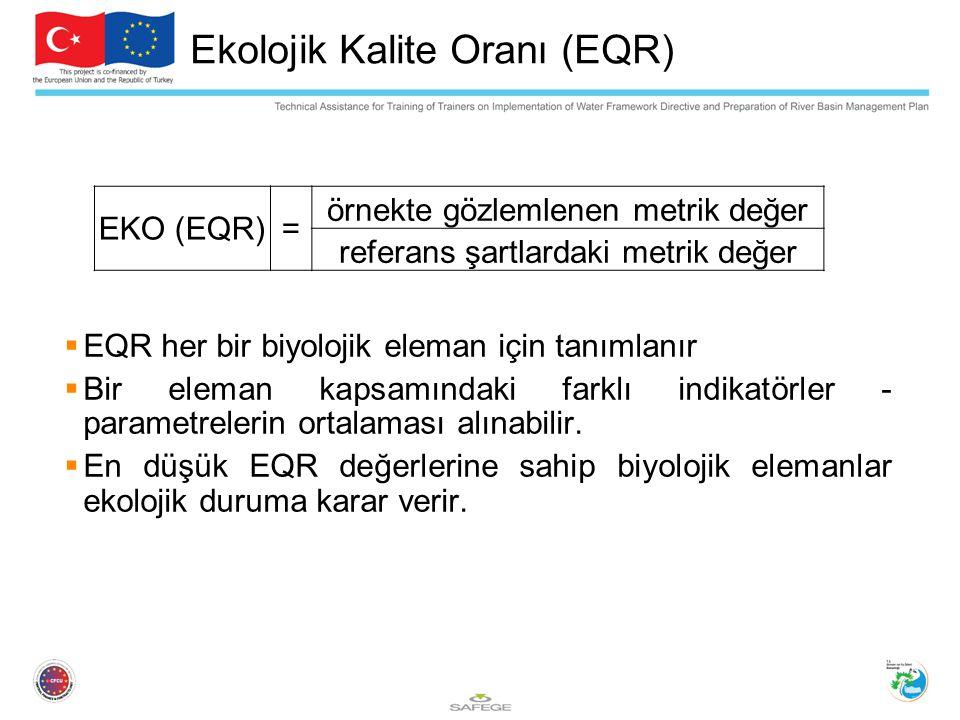  EQR her bir biyolojik eleman için tanımlanır  Bir eleman kapsamındaki farklı indikatörler - parametrelerin ortalaması alınabilir.