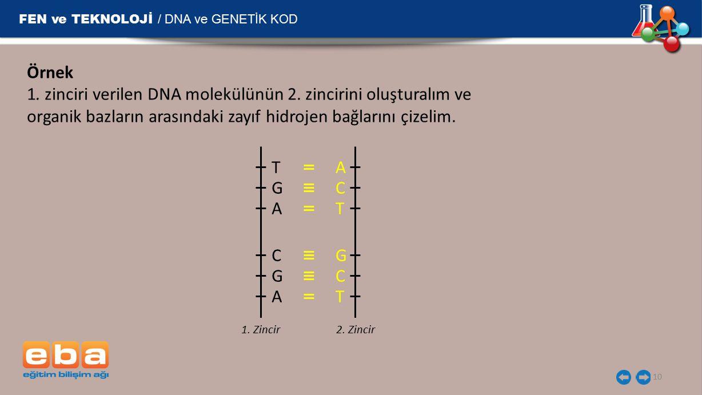 FEN ve TEKNOLOJİ / DNA ve GENETİK KOD 10 Örnek 1. zinciri verilen DNA molekülünün 2. zincirini oluşturalım ve organik bazların arasındaki zayıf hidroj