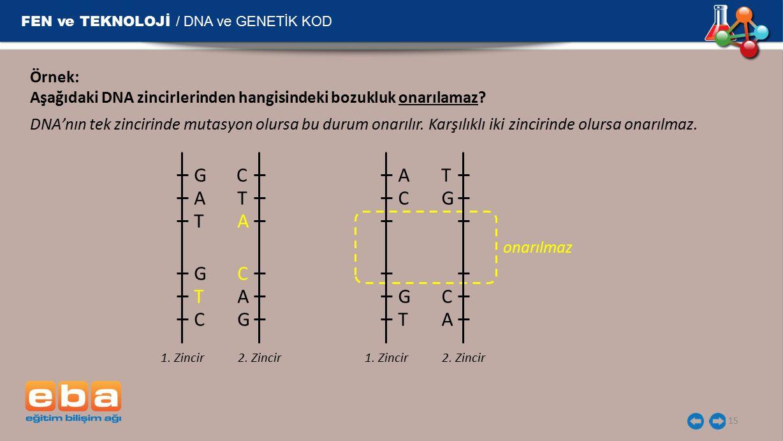 FEN ve TEKNOLOJİ / DNA ve GENETİK KOD 15 Örnek: Aşağıdaki DNA zincirlerinden hangisindeki bozukluk onarılamaz? T A C DNA'nın tek zincirinde mutasyon o