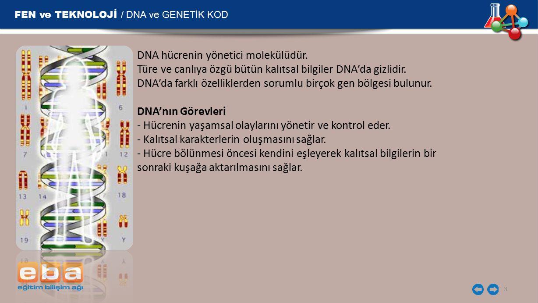 FEN ve TEKNOLOJİ / DNA ve GENETİK KOD 14 Mutasyon Bir DNA molekülü çoğunlukla kendini hatasız olarak eşler.