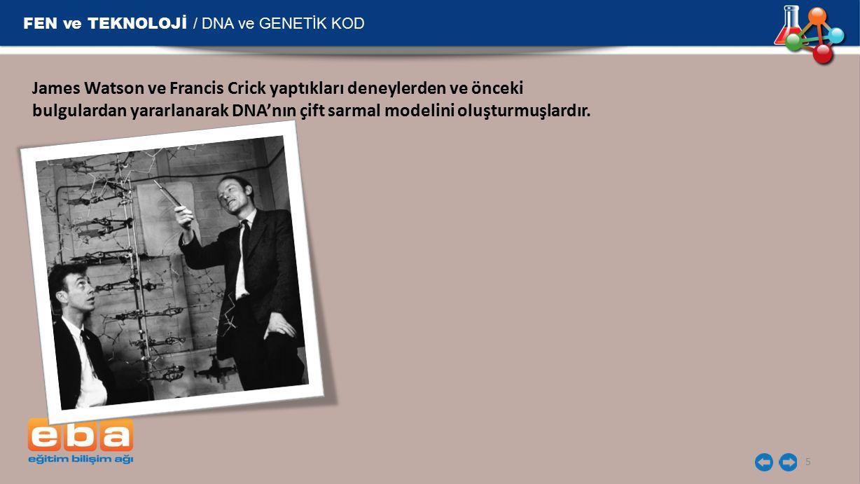 FEN ve TEKNOLOJİ / DNA ve GENETİK KOD 5 James Watson ve Francis Crick yaptıkları deneylerden ve önceki bulgulardan yararlanarak DNA'nın çift sarmal mo