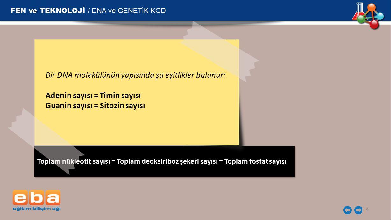 Toplam nükleotit sayısı = Toplam deoksiriboz şekeri sayısı = Toplam fosfat sayısı FEN ve TEKNOLOJİ / DNA ve GENETİK KOD 9 Bir DNA molekülünün yapısınd