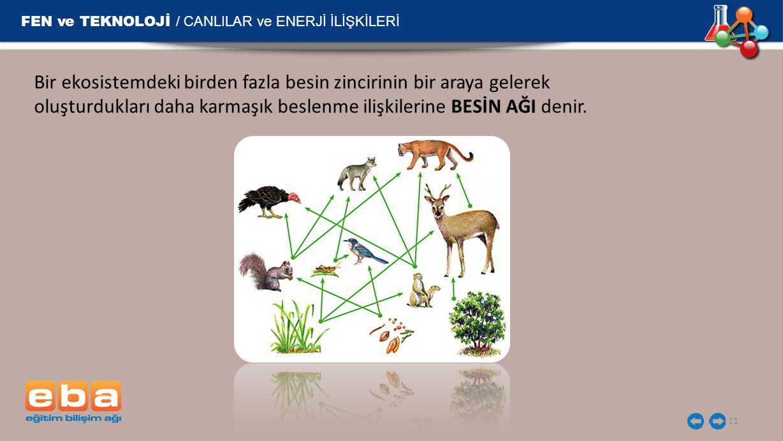 FEN ve TEKNOLOJİ / CANLILAR ve ENERJİ İLİŞKİLERİ 11 Bir ekosistemdeki birden fazla besin zincirinin bir araya gelerek oluşturdukları daha karmaşık bes