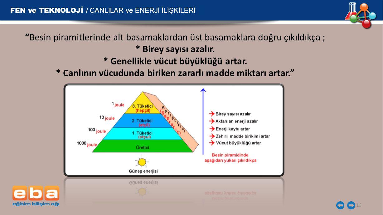 """FEN ve TEKNOLOJİ / CANLILAR ve ENERJİ İLİŞKİLERİ 16 """"Besin piramitlerinde alt basamaklardan üst basamaklara doğru çıkıldıkça ; * Birey sayısı azalır."""
