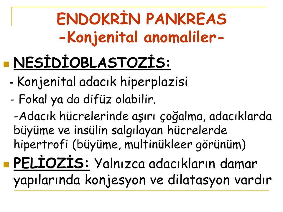ENDOKRİN PANKREAS -Konjenital anomaliler- NESİDİOBLASTOZİS: - Konjenital adacık hiperplazisi - Fokal ya da difüz olabilir.