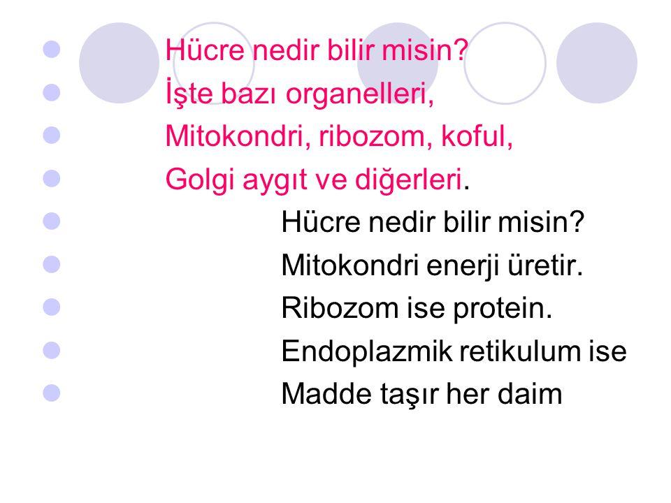 Hücre nedir bilir misin? İşte bazı organelleri, Mitokondri, ribozom, koful, Golgi aygıt ve diğerleri. Hücre nedir bilir misin? Mitokondri enerji üreti