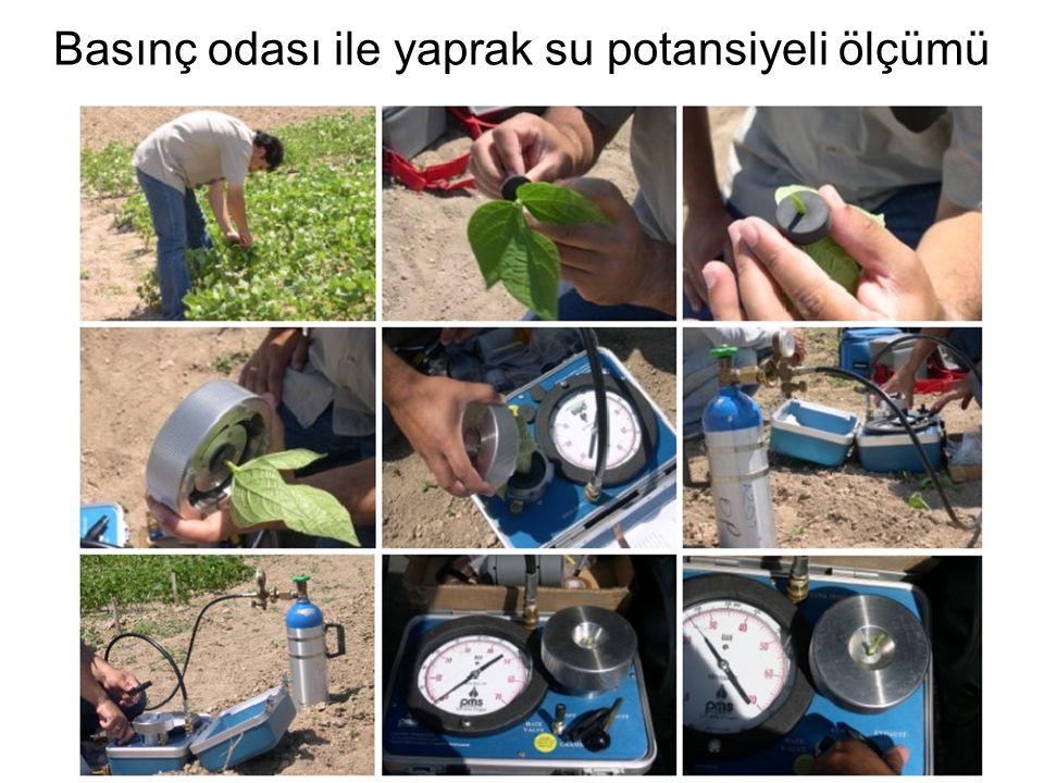 Basınç odası ile yaprak su potansiyeli ölçümü