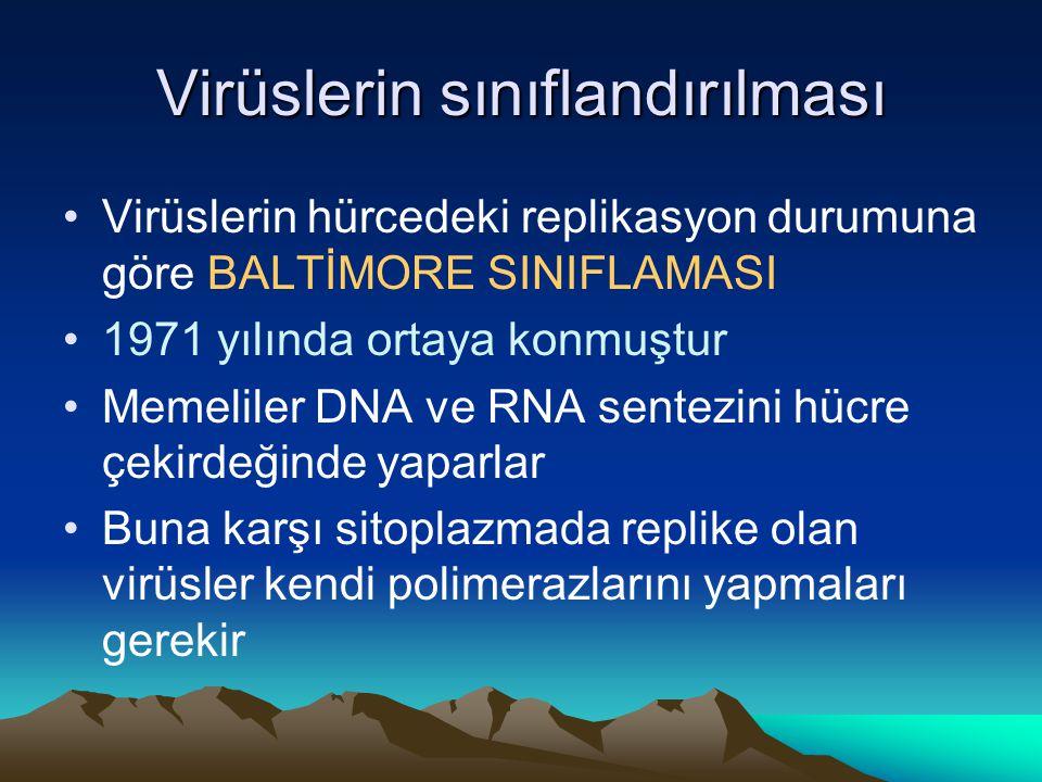 Virüslerin sınıflandırılması Virüslerin hürcedeki replikasyon durumuna göre BALTİMORE SINIFLAMASI 1971 yılında ortaya konmuştur Memeliler DNA ve RNA sentezini hücre çekirdeğinde yaparlar Buna karşı sitoplazmada replike olan virüsler kendi polimerazlarını yapmaları gerekir